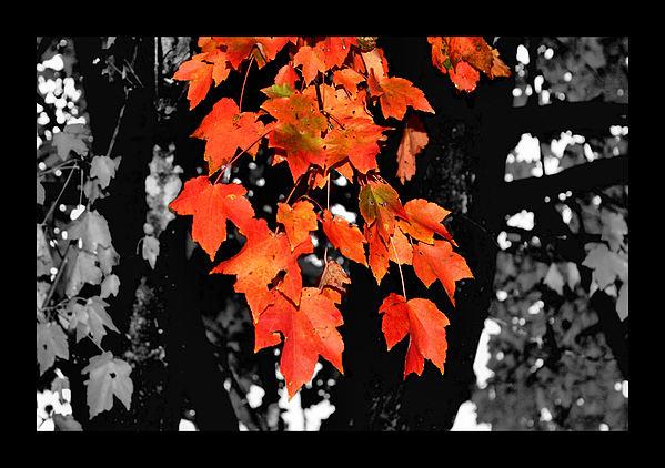 Fall Tree Print by Karen M Scovill