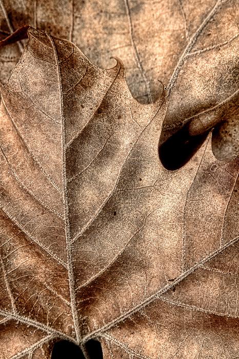 Fallen Leaves II Print by Tom Mc Nemar