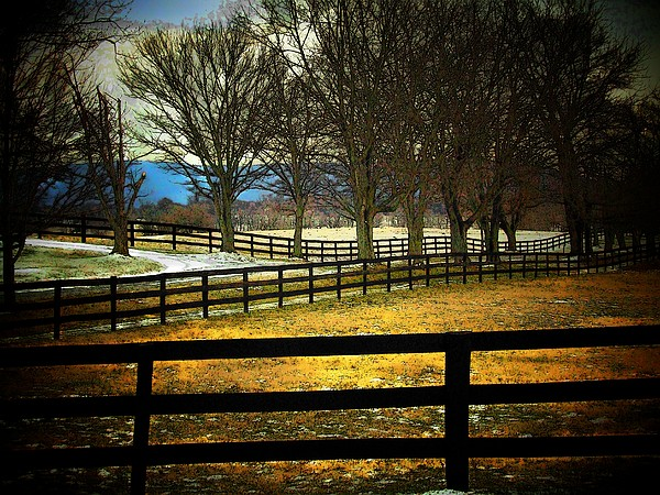 Michael L Kimble - Fence and Trees