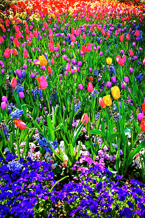 Field Of Flowers Print by Tamyra Ayles