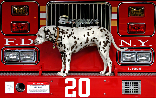 Fire Dog Print by Bryan Hochman