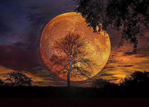 Scott Mendell - Fire Tree
