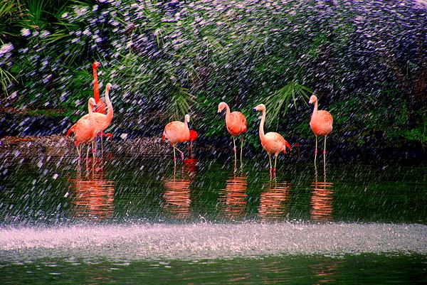 Flamingos II Print by Susanne Van Hulst