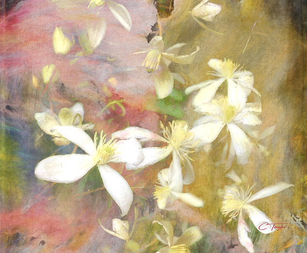 Colleen Taylor - Floating Petals