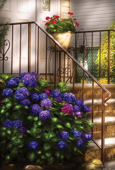 Flower - Hydrangea - Hydrangea And Geraniums  Print by Mike Savad