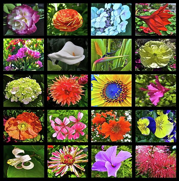 Flower Favorites Print by Gwyn Newcombe