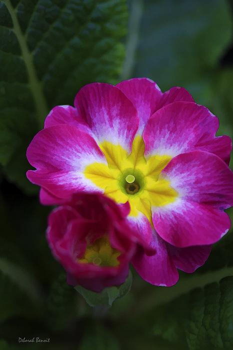 Flower In Spring Print by Deborah Benoit
