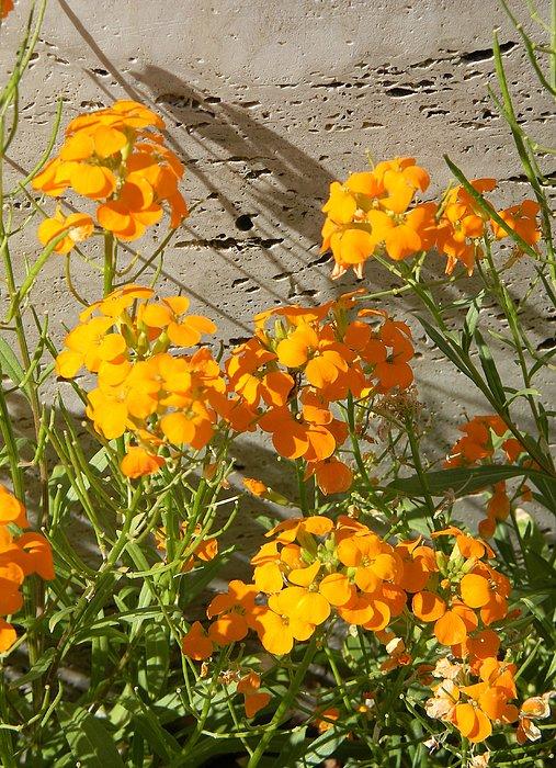 Flowers Orange 2 Print by Warren Thompson