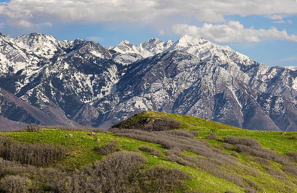 Foothills Above Salt Lake City Print by Utah Images