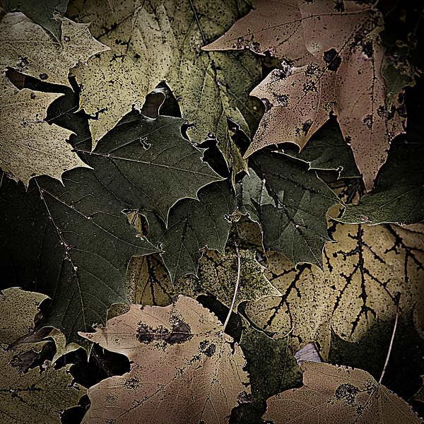 Forest Floor - Leaf 14 Print by Pete Hellmann