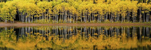 Dustin LeFevre - Forest Lake Reflection