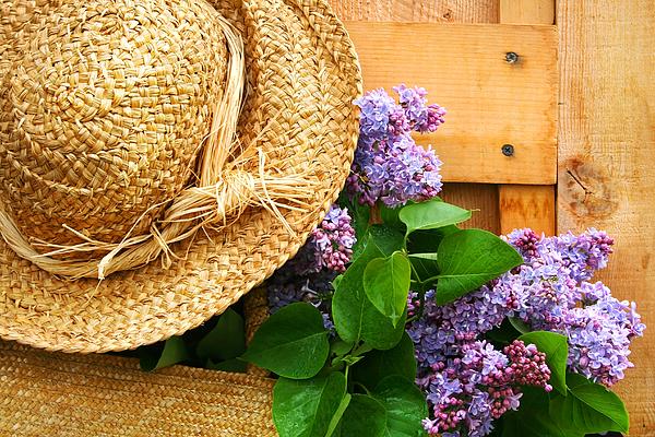 Freshly Picked Lilacs Print by Sandra Cunningham