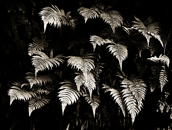 Fronds Print by Marilyn Hunt