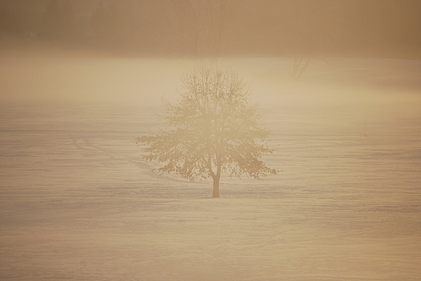 Frozen Natural Sepia Horizontal Print by Peter  McIntosh