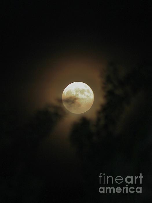 Mesa Teresita - Full Moon Through the Shadows