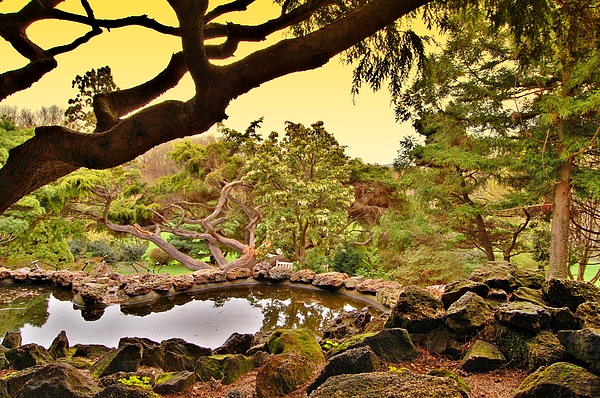 Angie Tirado - Garden For The Ones Of Flight - Deep Cut Gardens
