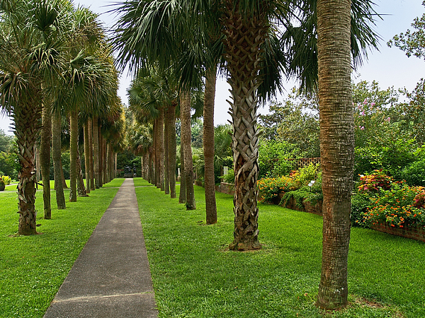 Garden palm trees by andrew kazmierski for Small to medium trees for garden