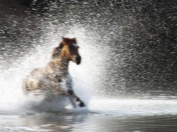 Marcia Mauskopf - Ghost Horse