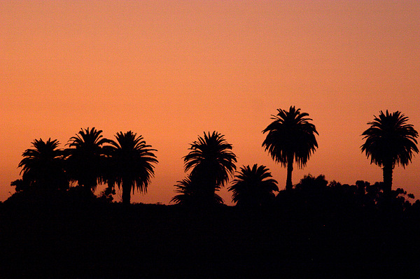 Glowing Palms Print by Brad Scott