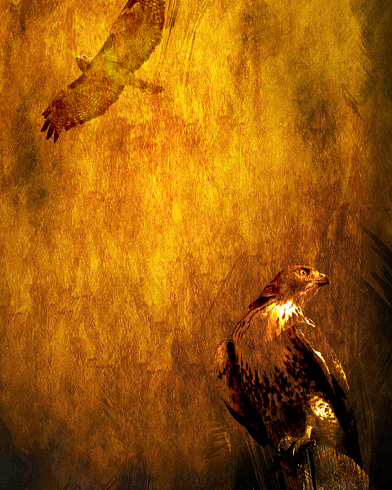 Golden Hawk 4 Print by Wingsdomain Art and Photography