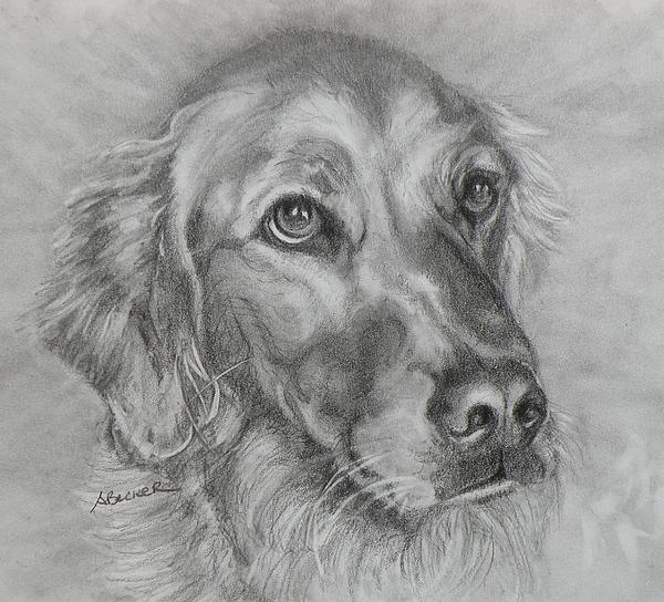 Golden Retriever Drawing Print by Susan A Becker
