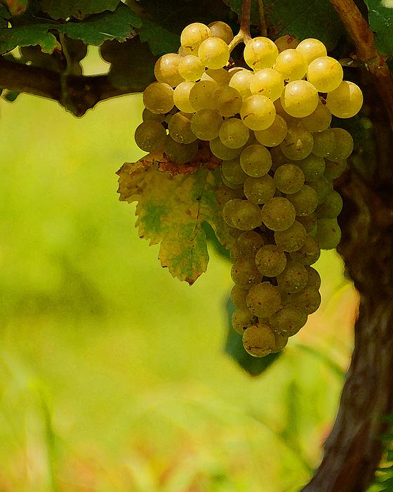 Grapes Print by Travis Aston