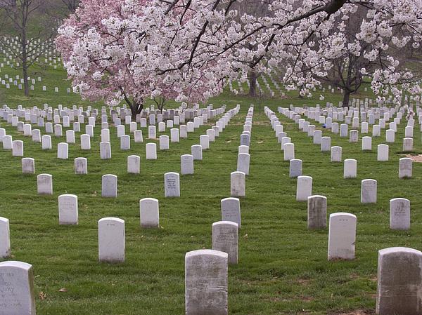 Graves Of Heros In Arlington National Cemetery By Tim Grams