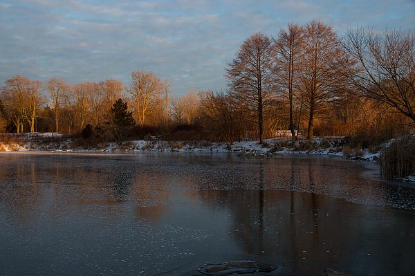 Georgia Mizuleva - Gray and Amber - an Early Winter Morning on the Lake Shore