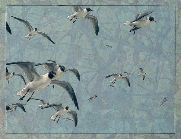 Gulls Print by James W Johnson