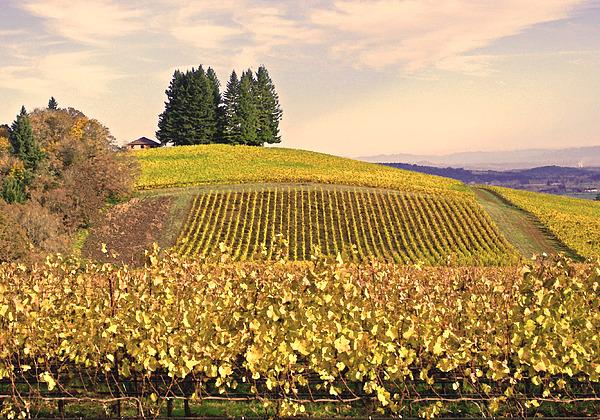 Harvest Time In A Vineyard Print by Margaret Hood