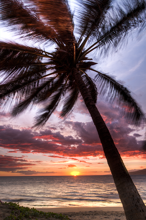 Hawaiian Coconut Palm Sunset Print by Dustin K Ryan
