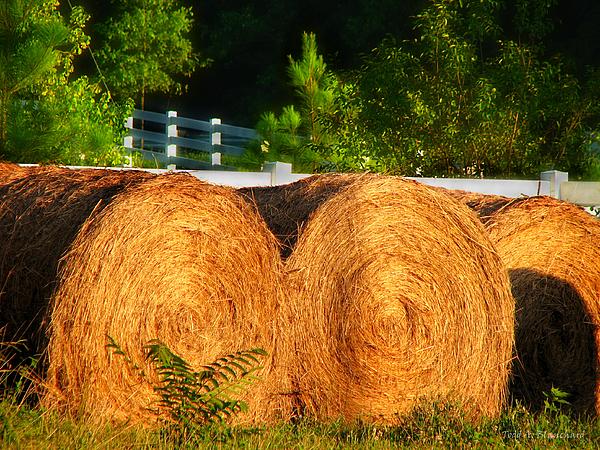 Hay Bales Print by Todd A Blanchard