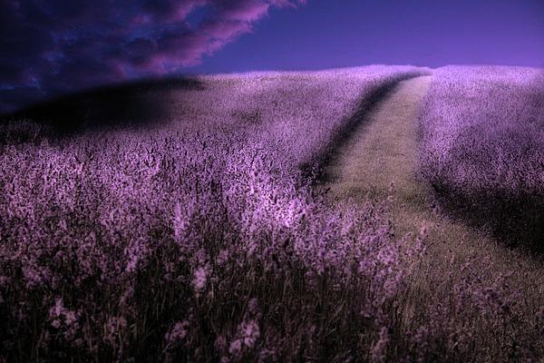 Gray  Artus - Heavens Path