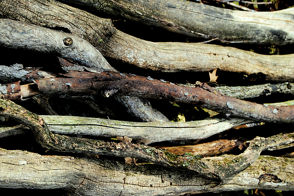 How Much Wood Would A Woodchuck Chuck Natural Wood Pile Ledge Park Wisconsin Print by Laura Pineda