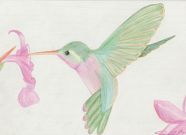 Hummingbird Print by Joanna Aud