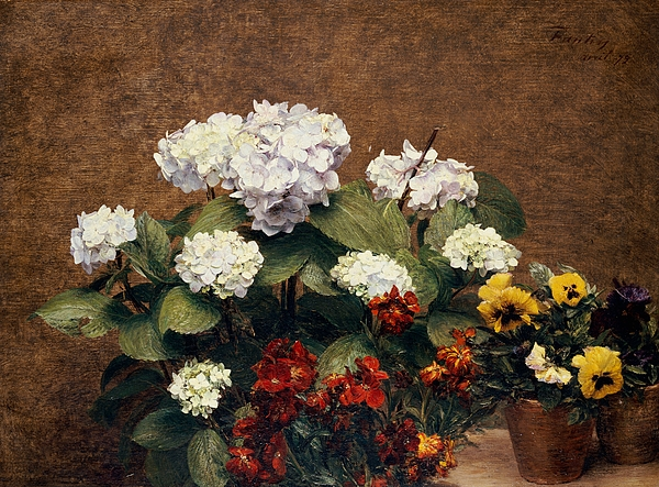 Hydrangeas And Wallflowers And Two Pots Of Pansies Print by Henri Jean Fantin-Latour