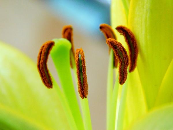Arlane Crump - Inside a Lily