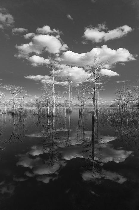 Into The Everglades Print by Debra and Dave Vanderlaan