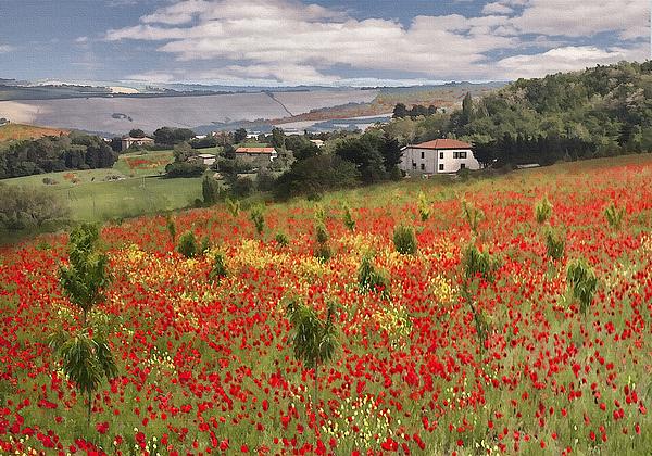 Italian Poppy Field Print by Sharon Foster