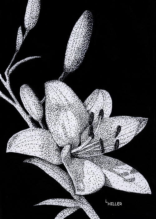 Jacqui's Lily Print by Linda Hiller