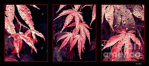 Sarah Loft - Japanese Red Maple Triptych