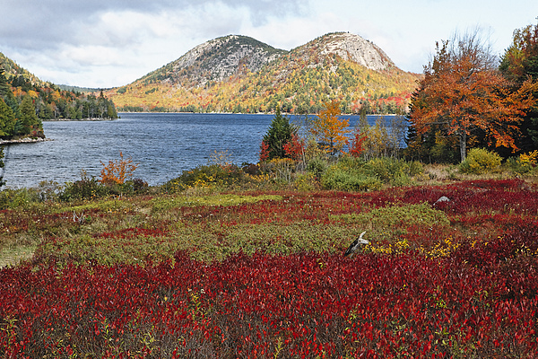 Jordan Pond And The Bubbles Print by George Oze