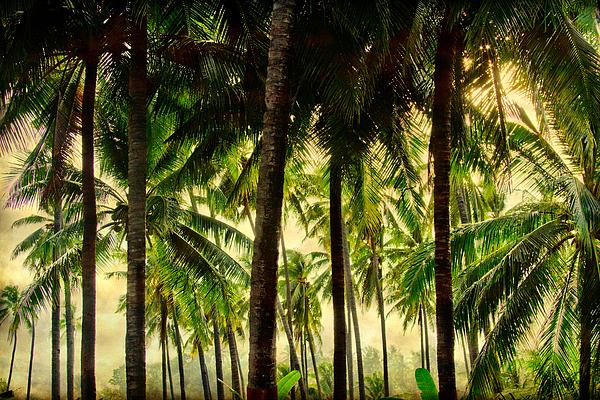 Jungle Paradise Print by James BO  Insogna
