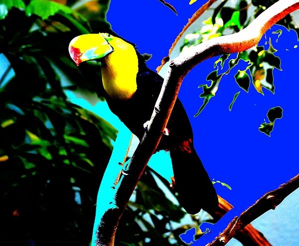 Anand Swaroop Manchiraju - Keel.billed Toucan