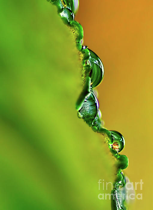 Leaf Profile And Water Droplets Print by Kaye Menner