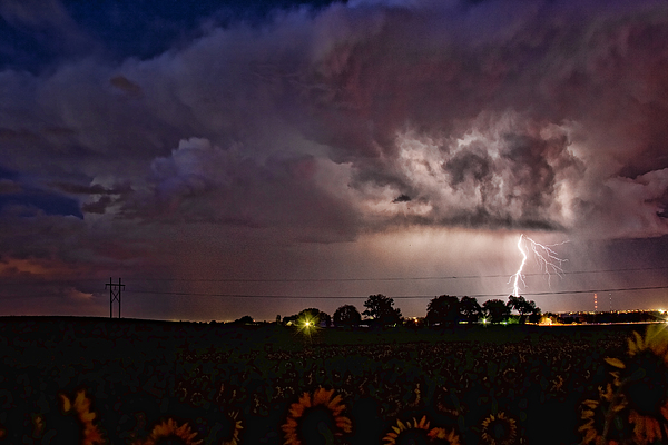 Lightning Stormy Weather Of Sunflowers Print by James BO  Insogna