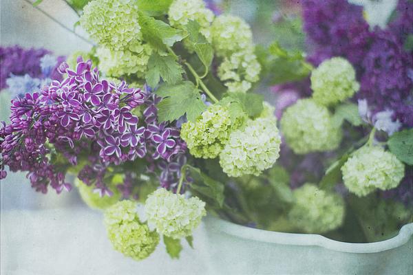 Lilacs And Snowballs Print by Rebecca Cozart