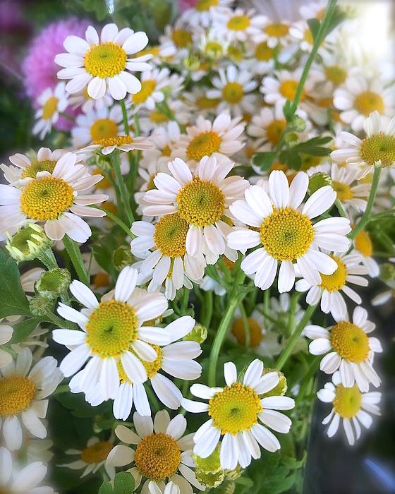 Wonju H - Little daisies