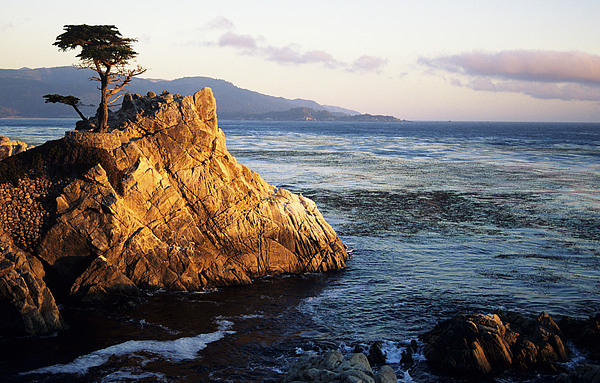 Lone Cypress Tree Print by Michael Howell - Printscapes