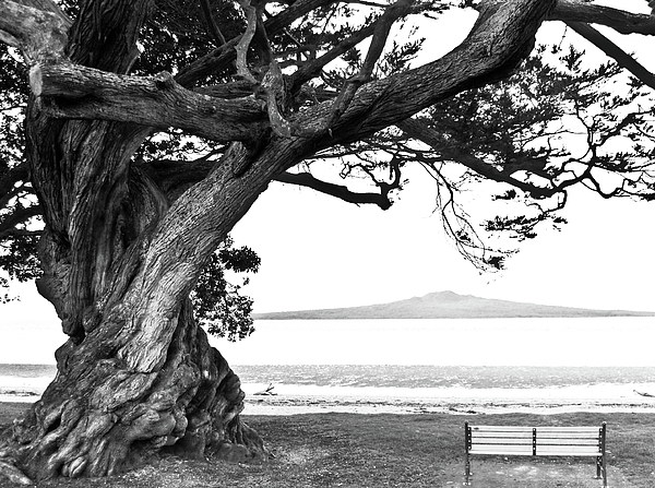 Lone Tree Bench And Volcano Print by Yurix Sardinelly